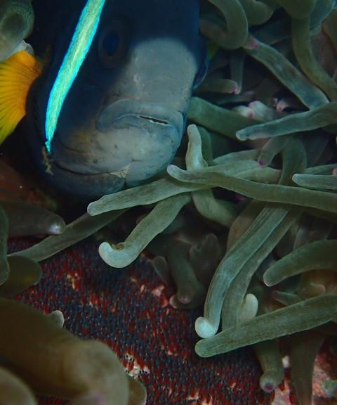 伊豆海洋公園で見られる生物を紹介しています。