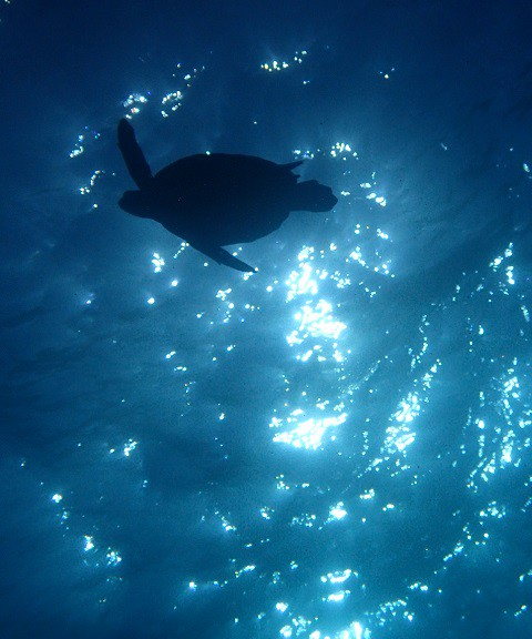 ブリマチの根にてウミガメ・シルエット
