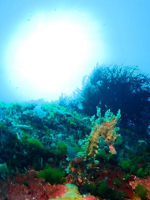 太陽とハナタツ幼魚