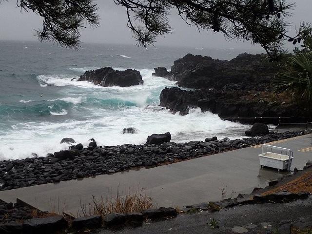伊豆海洋公園・見事な荒れっぷり