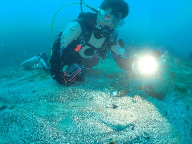 2の根砂地にカスザメ成魚