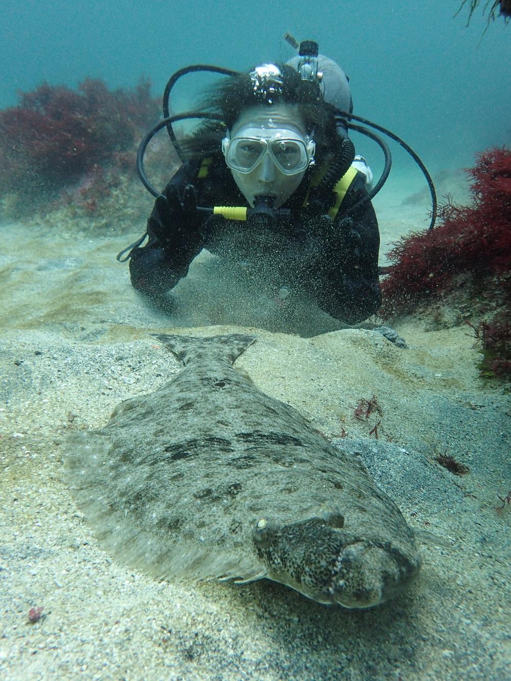 伊豆海洋公園のヒラメは巨大