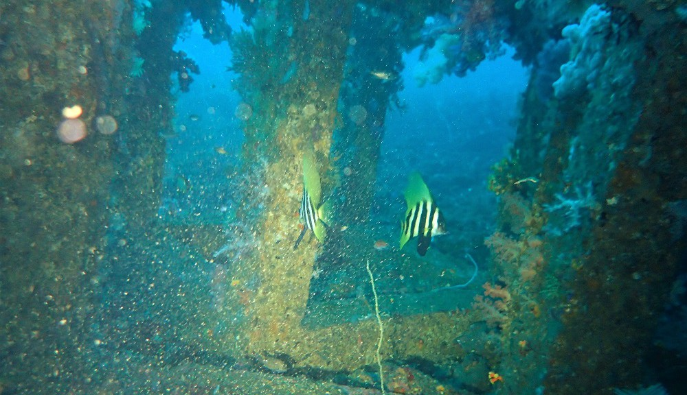沖漁礁、テングダイ