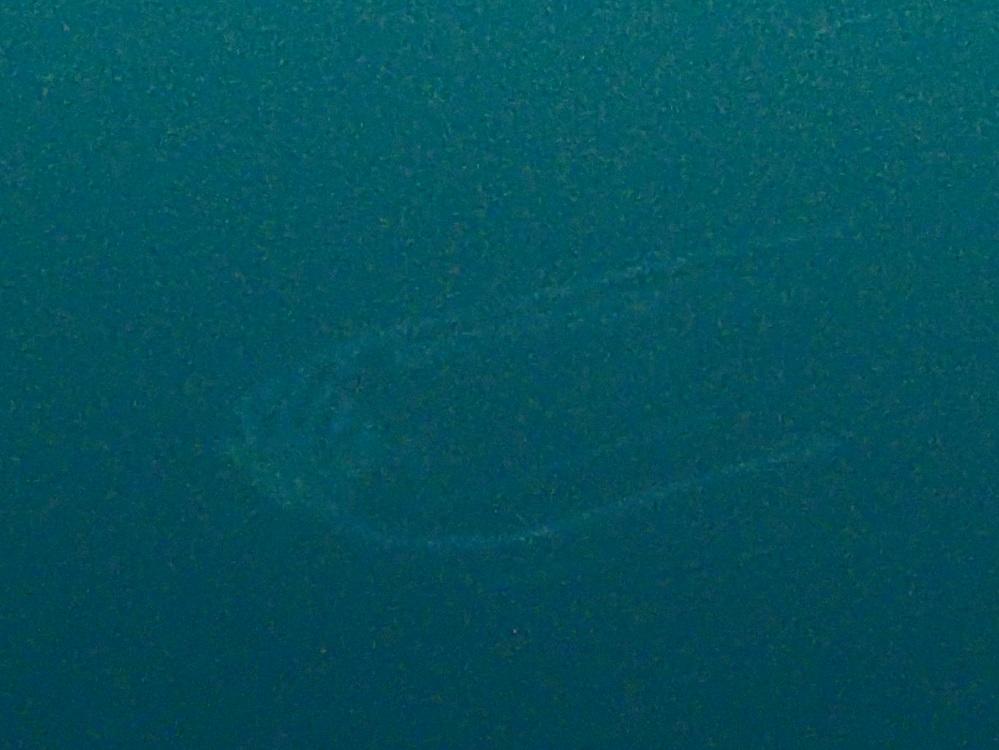 遠目にイトヒキアジ幼魚