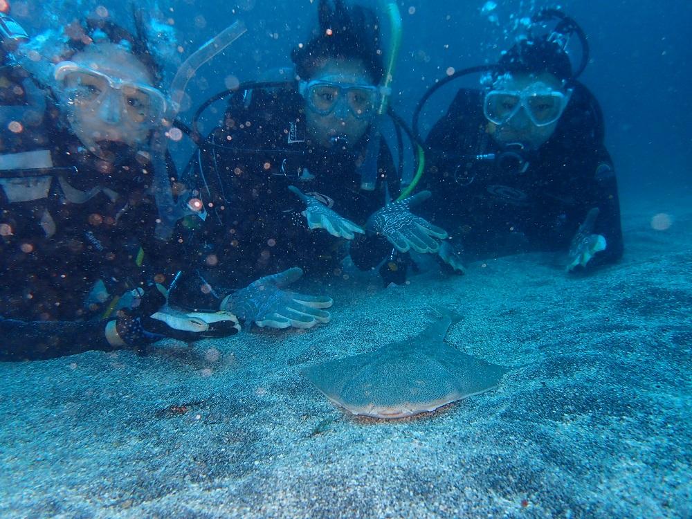 カスザメ幼魚を囲んで、、、
