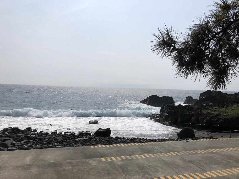 伊豆海洋公園・今日のコンディション