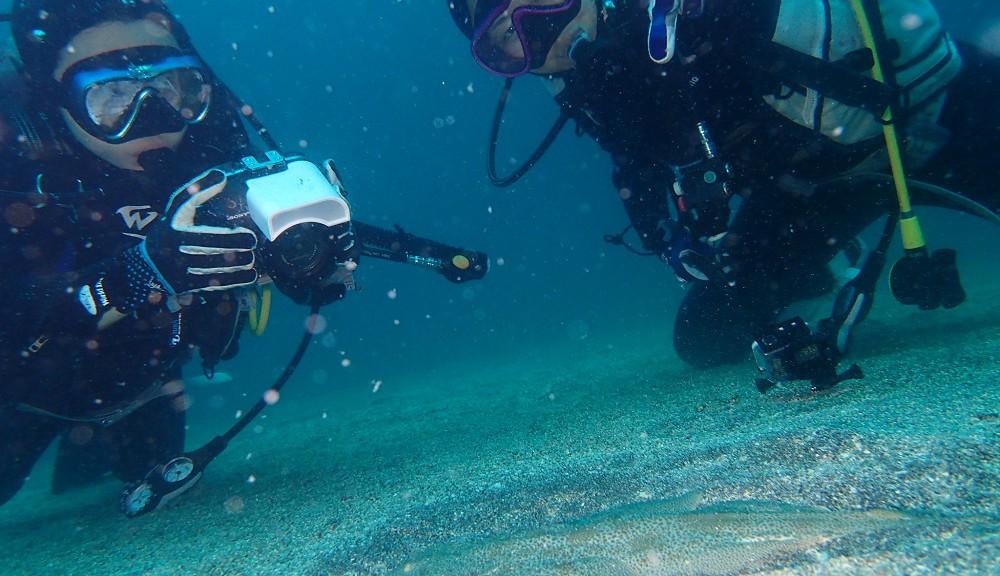 砂地の深場にてカスザメ幼魚