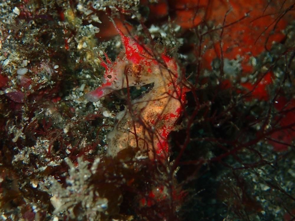 クエ穴にて見られているハナタツ赤