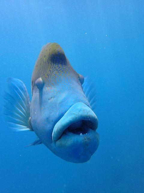 近すぎ、水中で魚と初めてハグした・・・