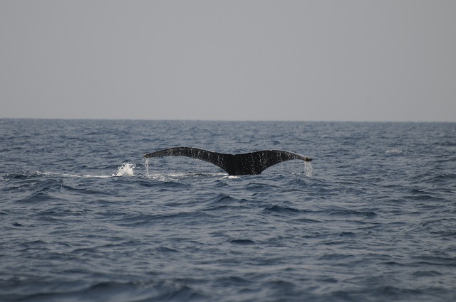 まずは序盤、親クジラのテール