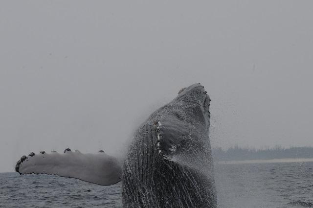クジラも○○記念に来賓としてお越しです。