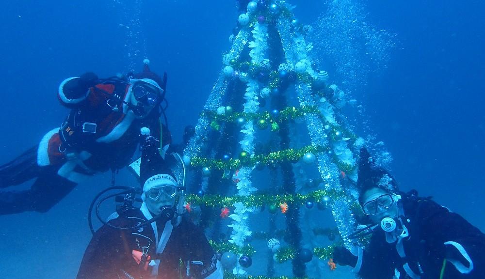 クリスマスツリーにて
