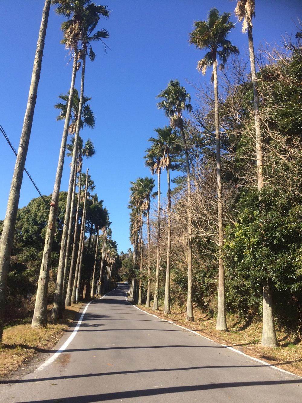 道を抜けると伊豆海洋公園到着
