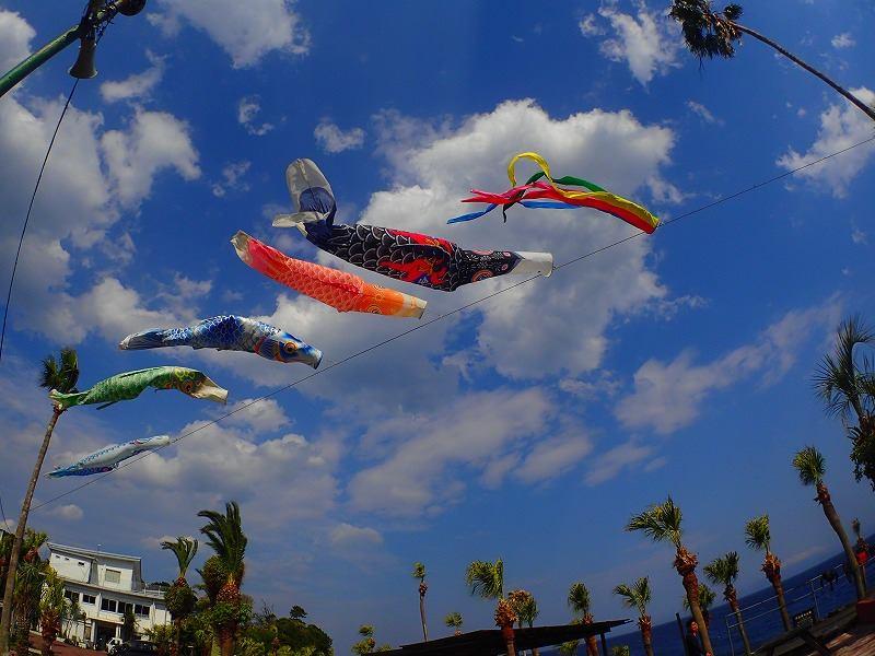 伊豆海洋公園の空に舞う、こいのぼり
