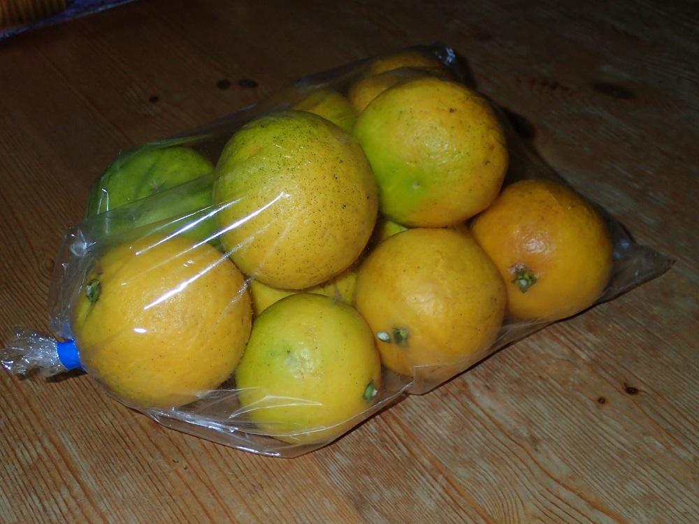 ニューサマーオレンジ購入