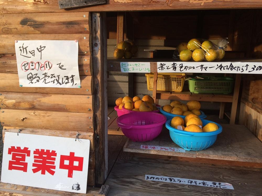 甘夏、ニューサマーオレンジ販売