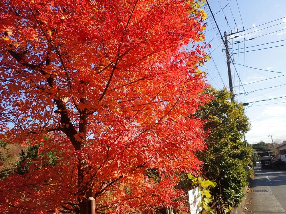 お店近くの紅葉