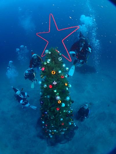 クリスマスツリー、砂地にて