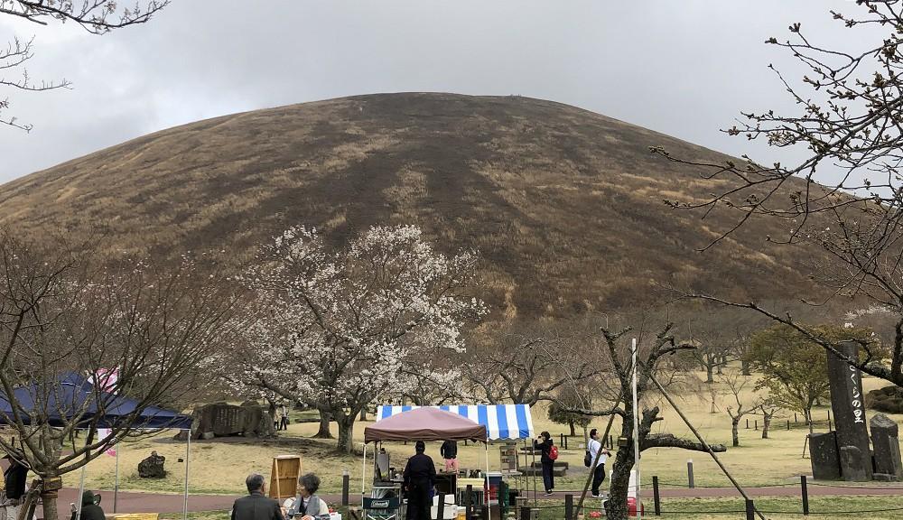 伊豆高原・桜の里