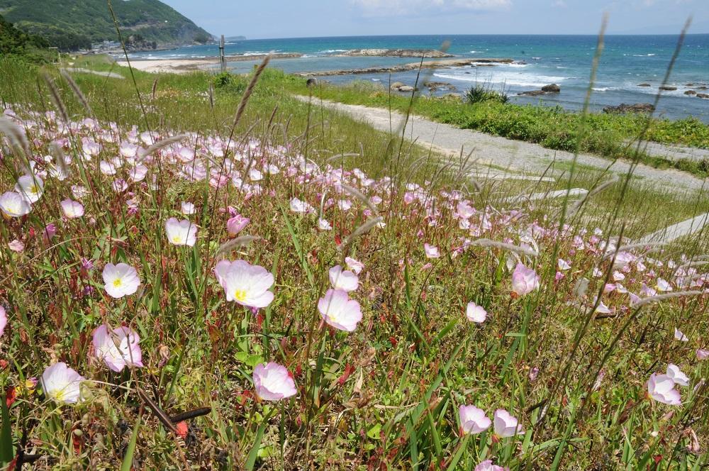 浜辺に花が咲いてました
