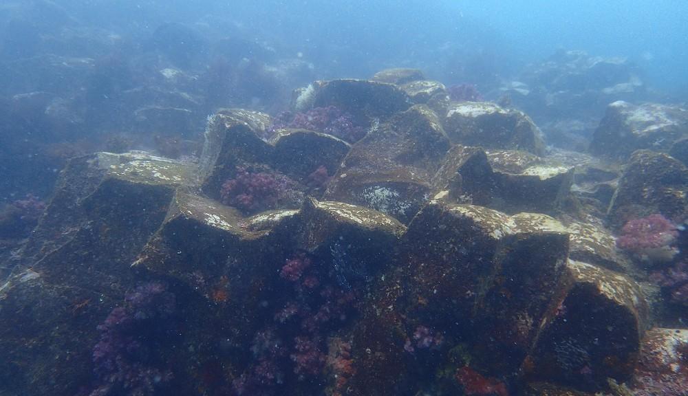 伊豆海洋公園・柱状節理