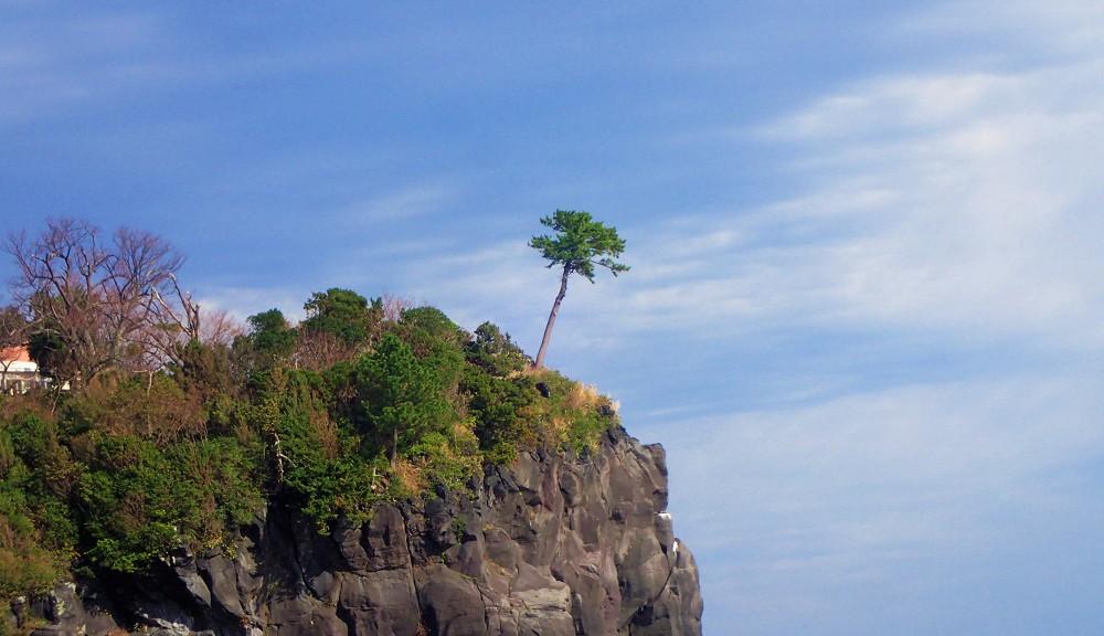 ダイビングサイトから見る伊豆の風景・一本の木