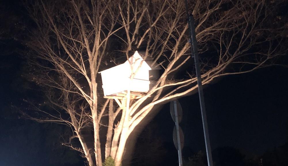 国道沿いにツリーハウス