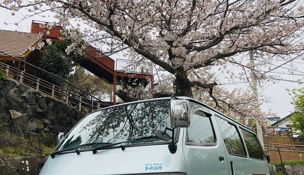 桜とピーフィッシュ1号車