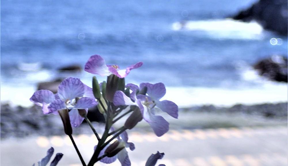 海沿いに咲く癒しの花