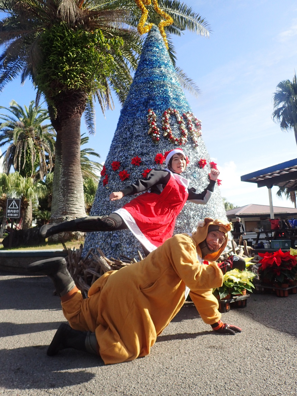 伊豆海洋公園・園内クリスマスツリー
