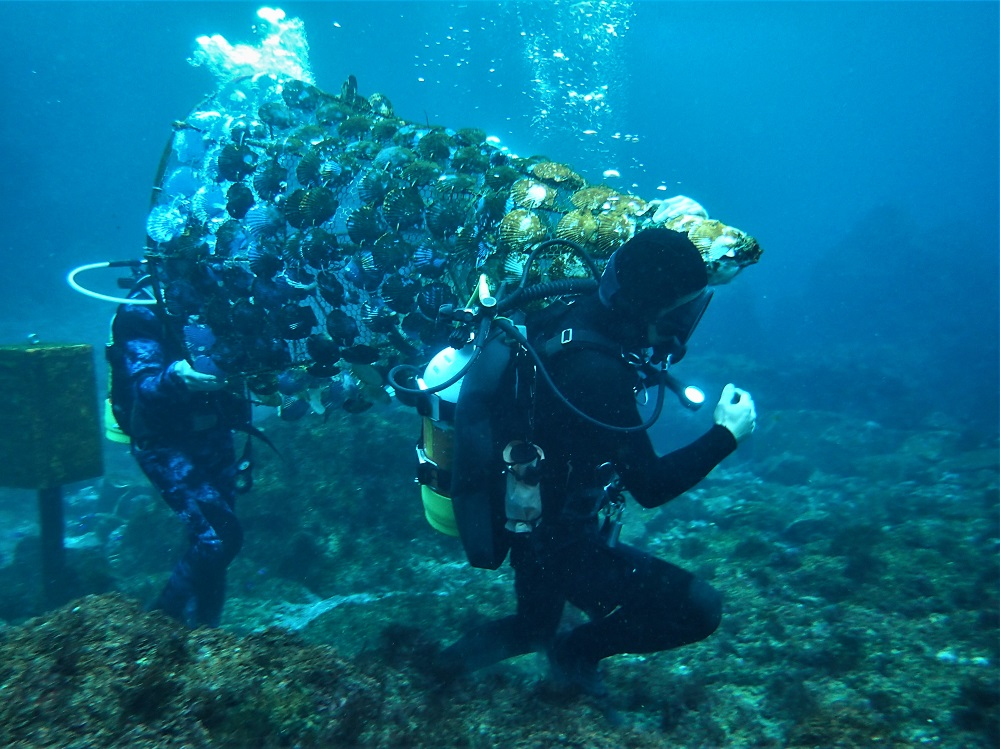 水中ツリー人海戦術で撤去