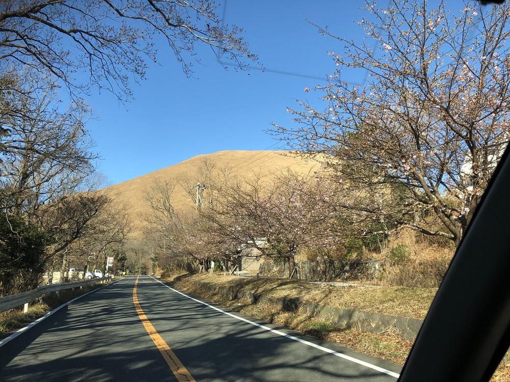 大室山と青い空と桜