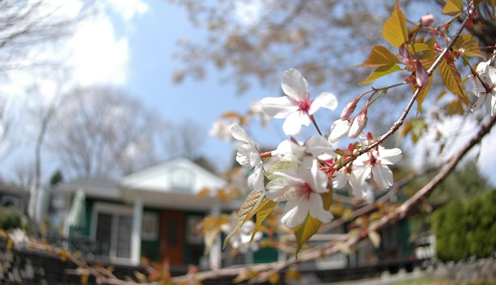 春の空に桜の花が似合う