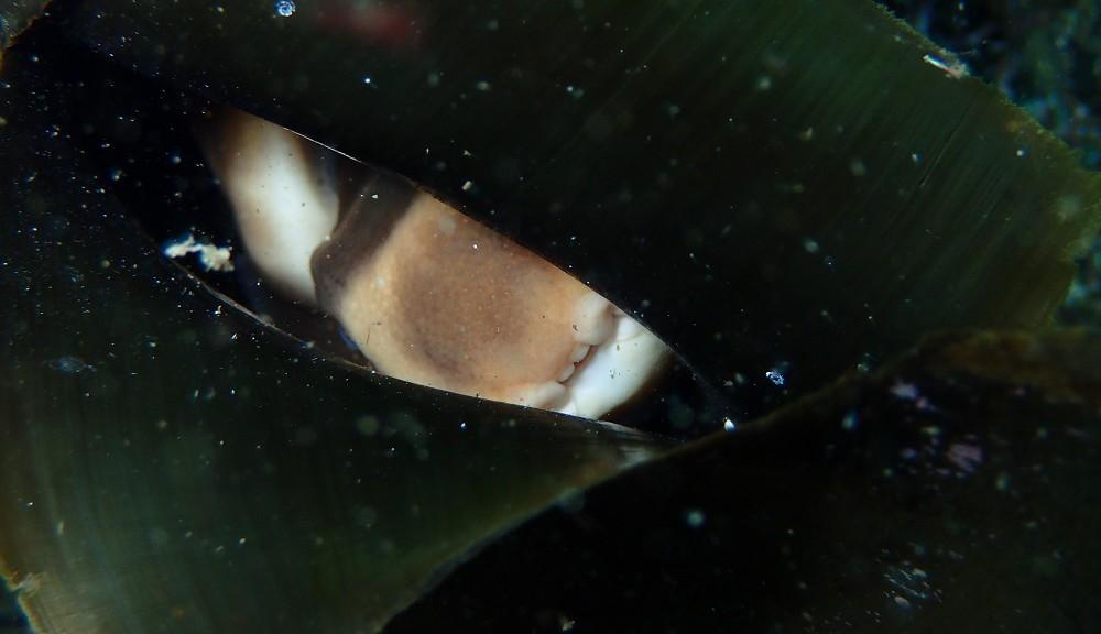 卵の中で見えるネコザメ・ベービーの顔