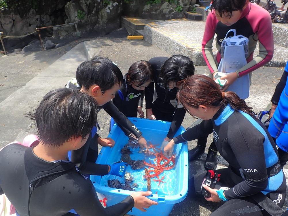 海の生物ふれあい教室