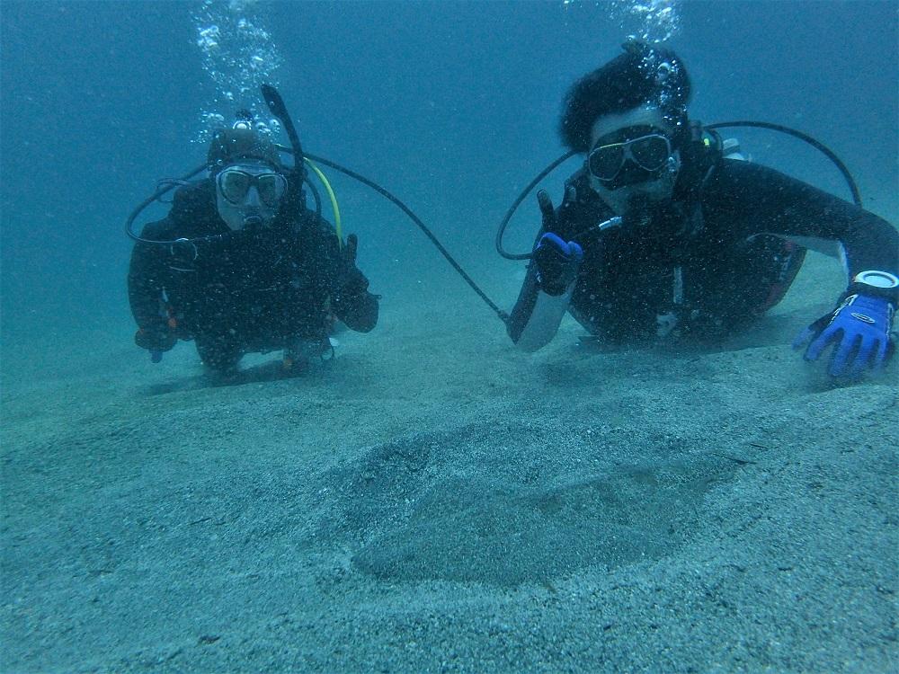 砂地にてカスザメ