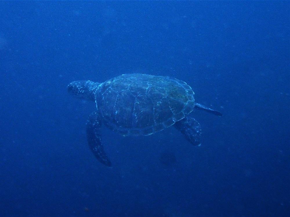 遠目にウミガメ