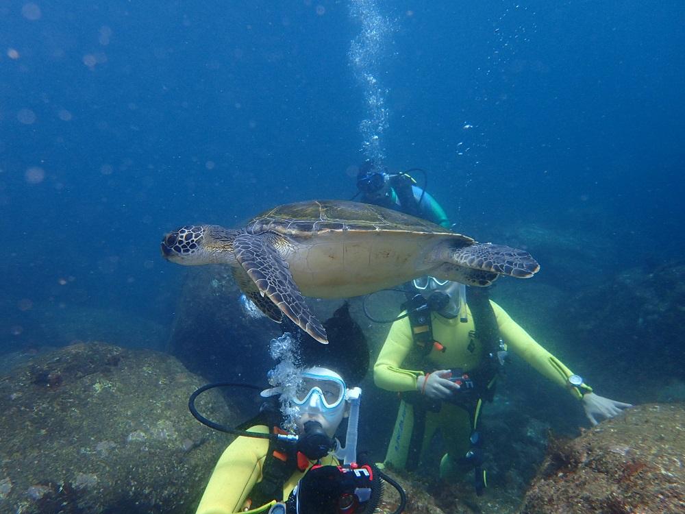 ゆっくりと泳ぐウミガメ