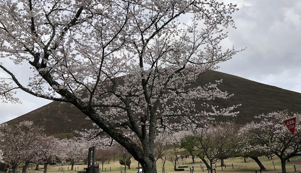 桜の里にて